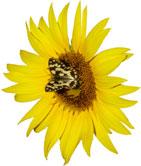 AUTISME-papillon.jpg
